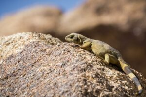 Wildlife Watching in the Desert – What to Know and Where to Go