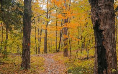 Los Poconos: Todo el esplendor del otoño.