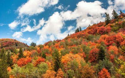 3 Vibrant Fall Days in Eastern Idaho's Yellowstone Teton Territory