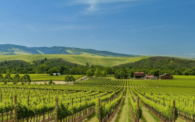 Wine Tours and More in the Pacific Northwest