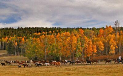 5 Gründe warum die Paradise Guest Ranch das beste Dude Ranch-Erlebnis in Wyoming bietet
