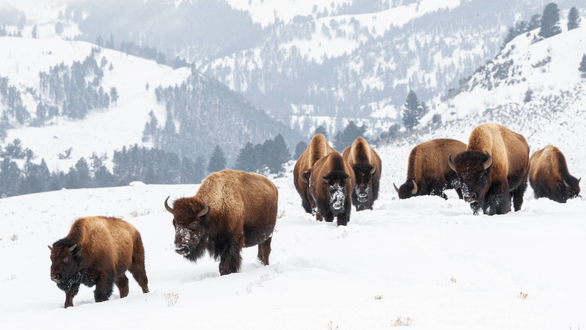 6 choses à faire lors de la visite de Yellowstone en hiver