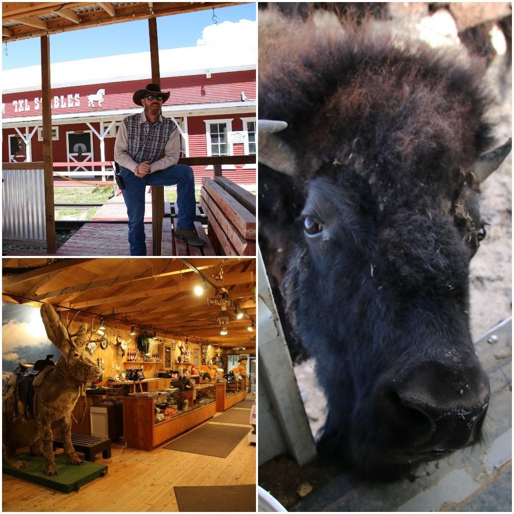 bison, bison train, cowboy, gift shop
