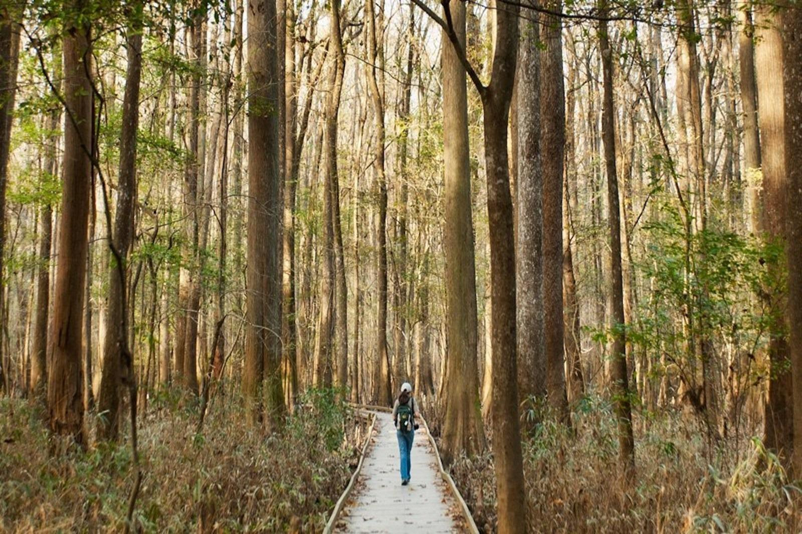 Congaree National Park, boardwalk, trees, forest