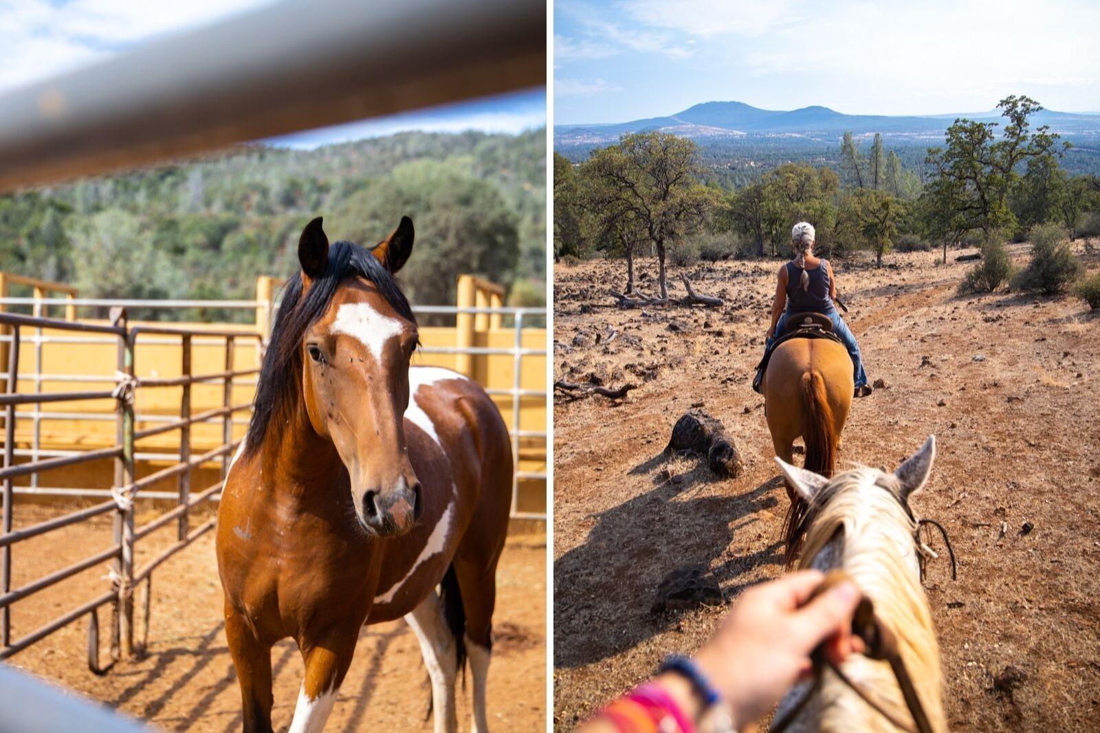 Wild Horse Sanctuary in UpState California