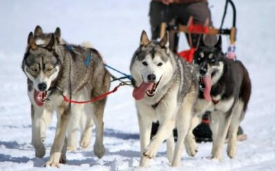 Top Snow Dog Sled Tours in the U.S.