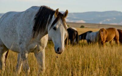 Unforgettable Discoveries in Wind River Country
