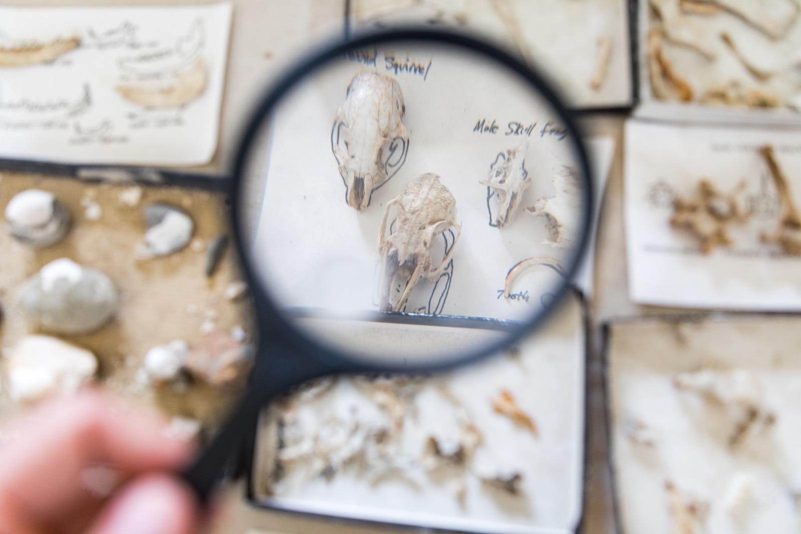 california-high-sierra-madera-fossil-discovery-center-chowchilla-7