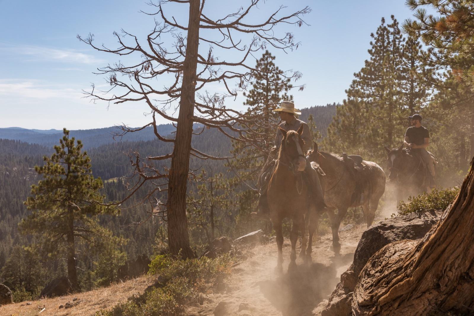 california-high-sierra-tuolumne-aspen-meadow-pack-station-horseback-riding-1
