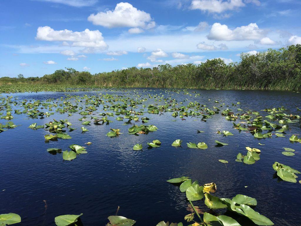 everglades, everglades national park, florida parks