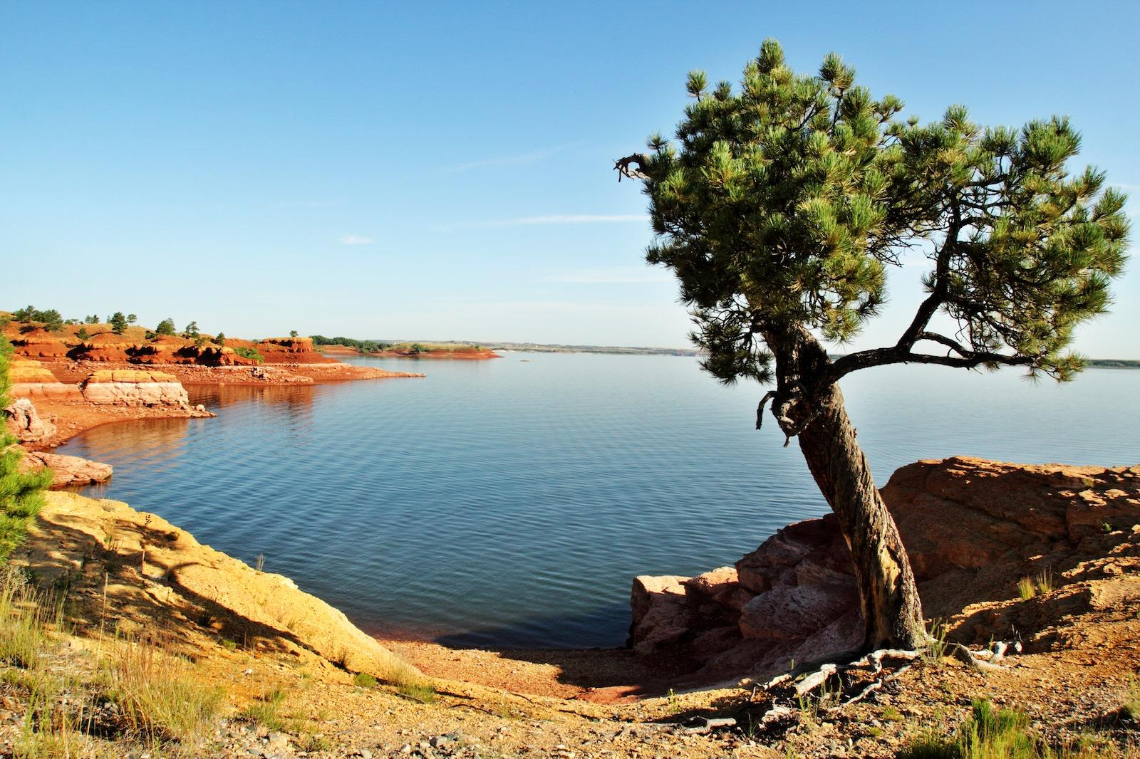 Tree on the shore of Glendo State Park reservoir in Platte County, Wyoming