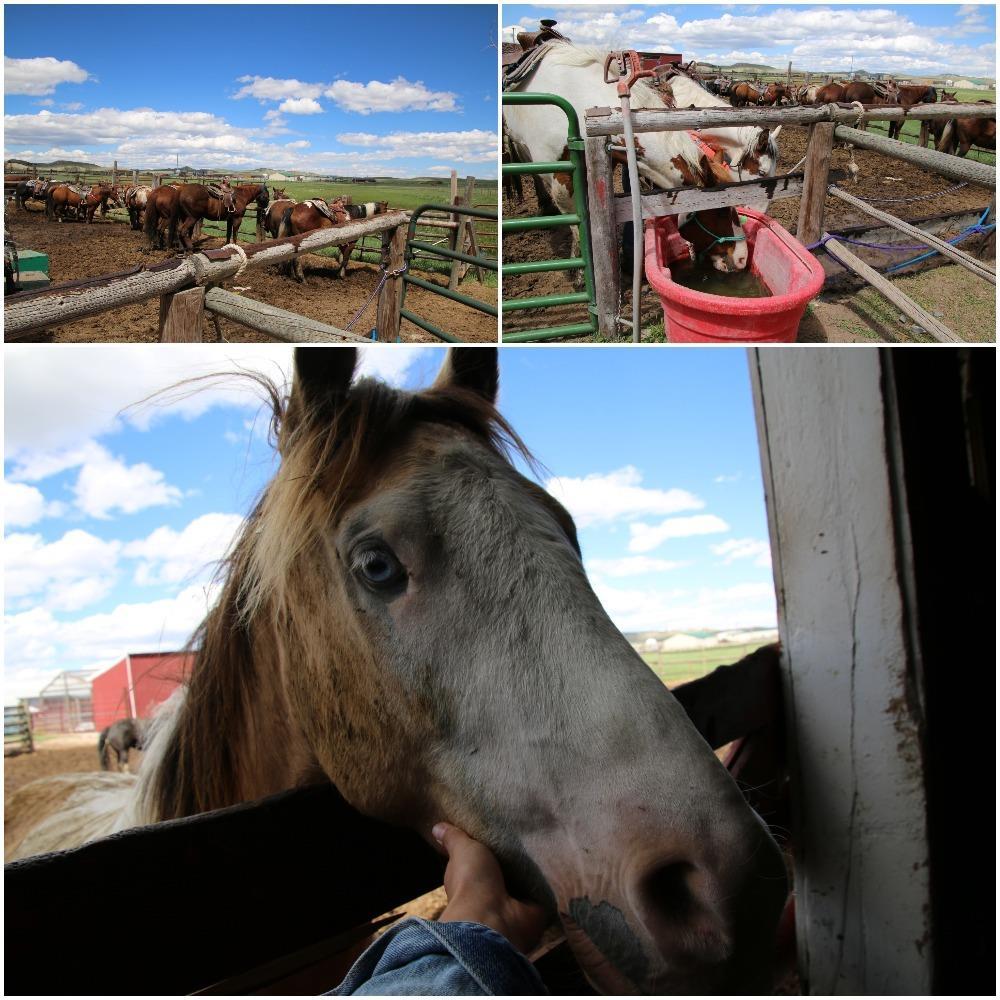 trail ride, horseback riding, cheyenne, horses