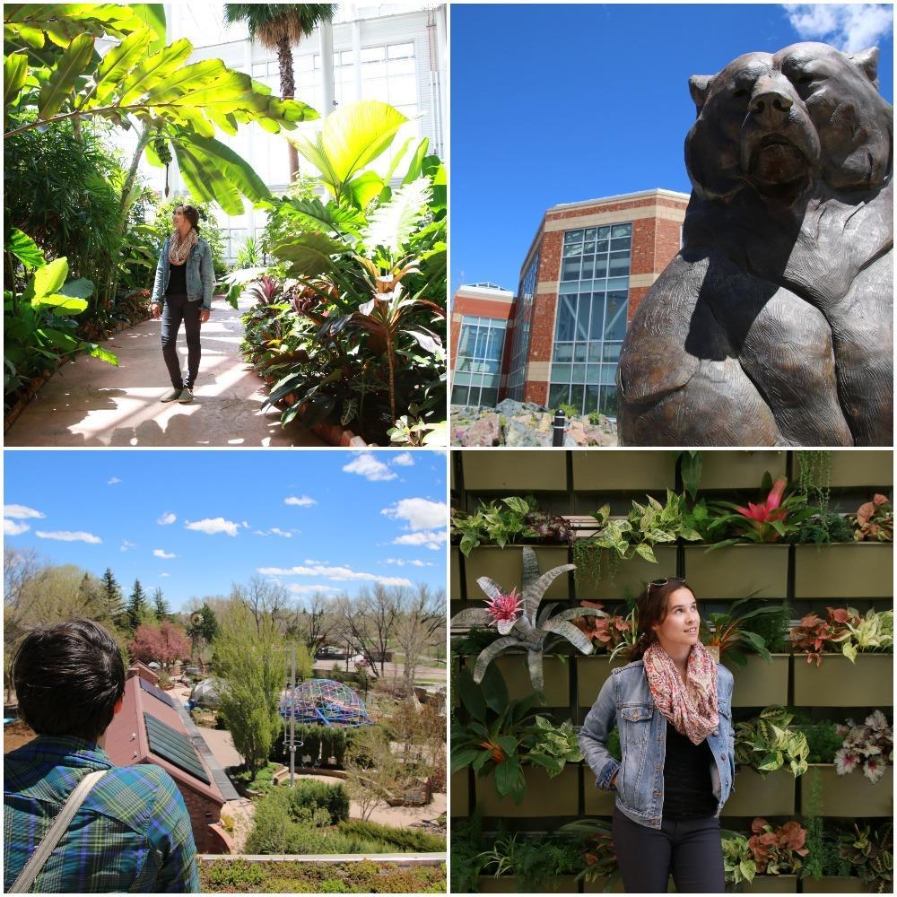 botanic gardens, flowers, gardens, sculpture
