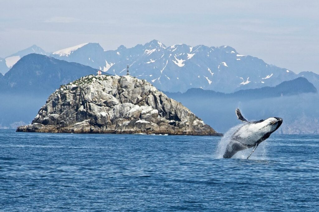 alaska national park, whale watching