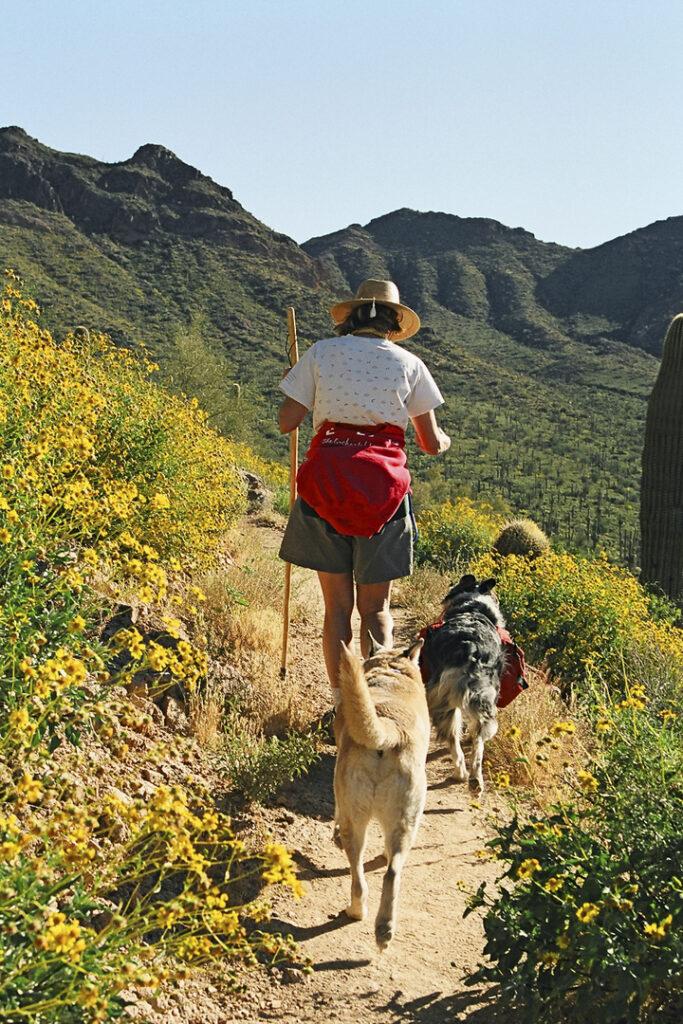Usery Mountain Regional Park Arizona