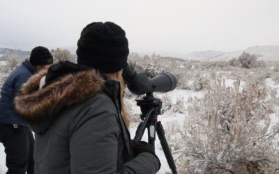 Yellowstone Wildlife Tour with Lamar Valley Touring