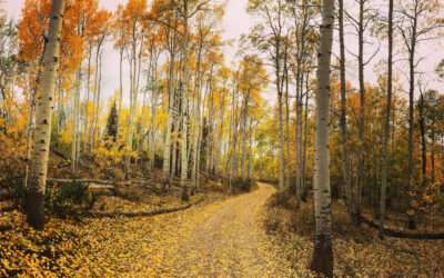 Plan your fall and winter getaway to Carbon County, Wyoming