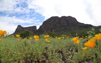 Which Arizona State Parks to Visit This Spring