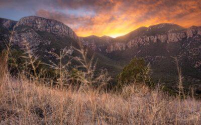 Sierra Vista, Arizona: colibríes, bodegas y más