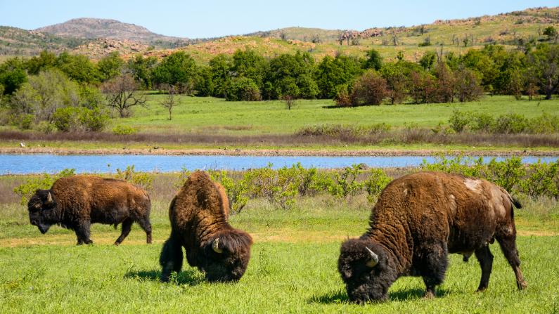 wildlife oklahoma
