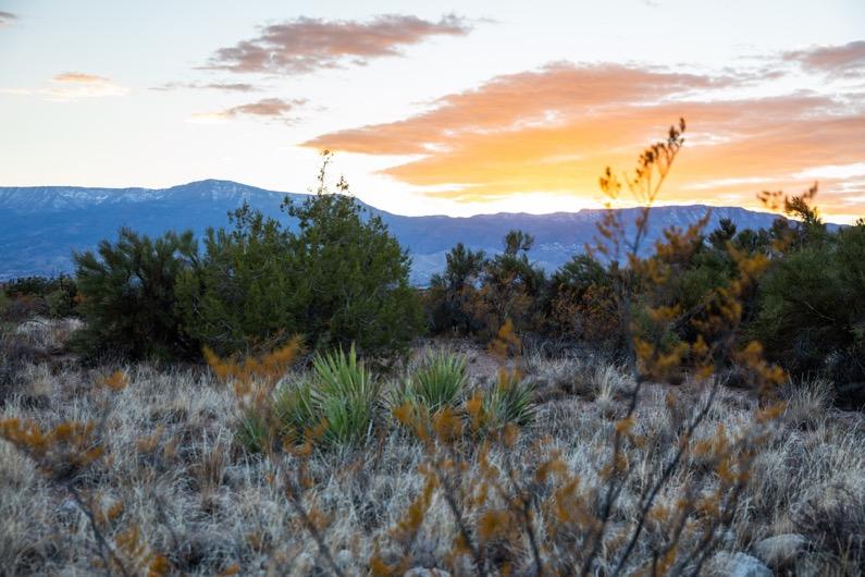emily-sierra-arizona-cottonwood-dead-horse-ranch-state-park-sunset