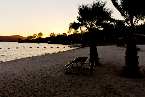 Evening shore with palm trees and picnic table at Cattail State Park, Arizona