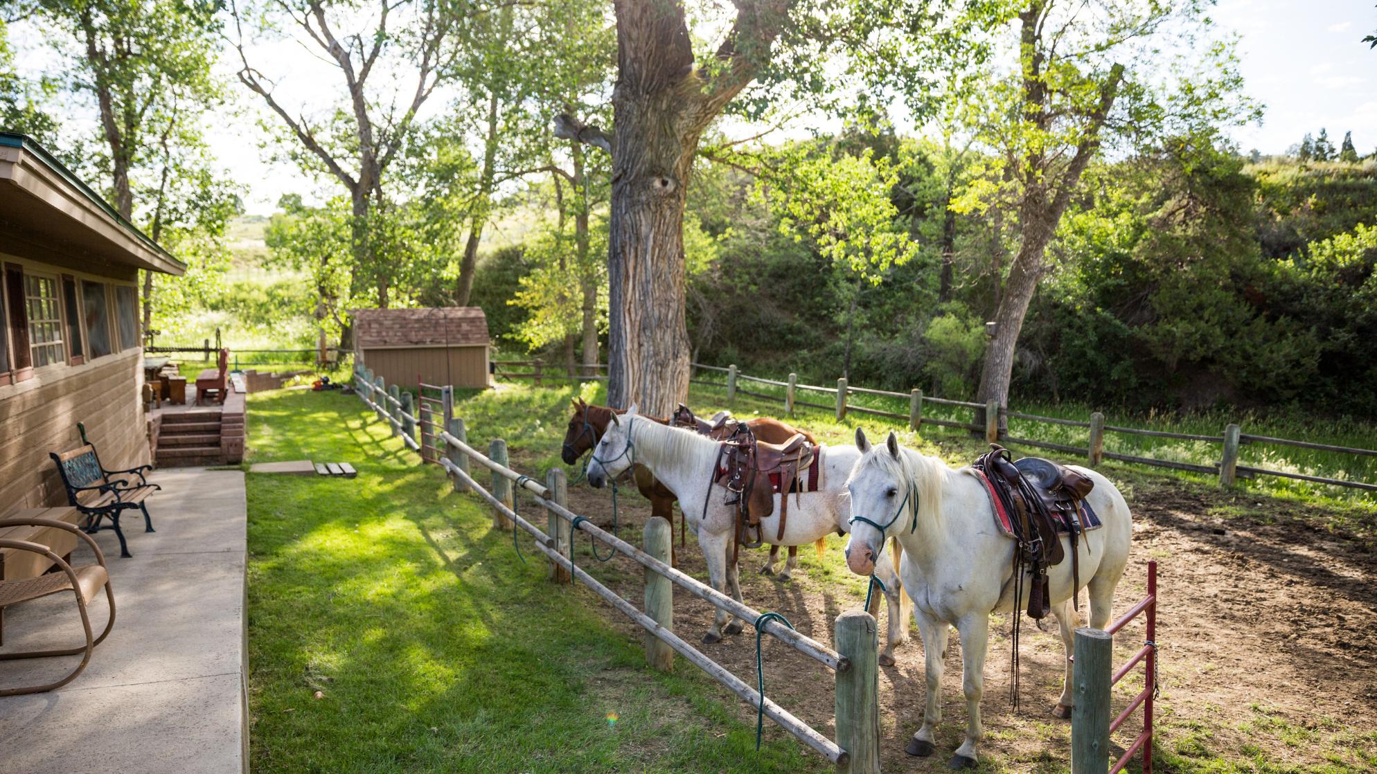 Horseback riding in Billings in the fall