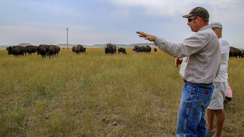 Durham Bison Ranch tour in Gillette, Wyoming