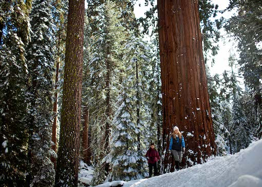 People snowshoeing in Sequoia National Park